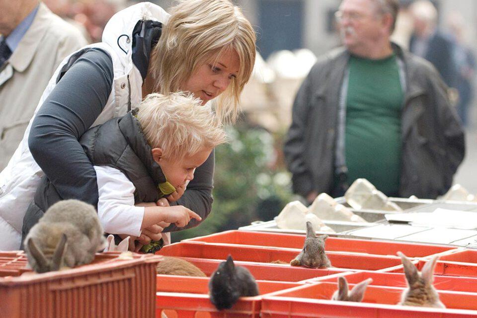 ZieZo! | Kleindierenmarkt Barneveld verhuist naar Midden Nederland Hallen